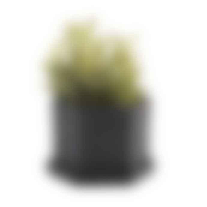 Chive Black Hexi Plant Pot & Saucer
