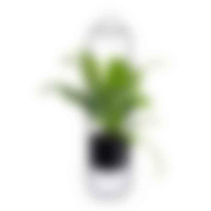 XLBOOM Black Sonar Hanging Plantpot (2 colours)