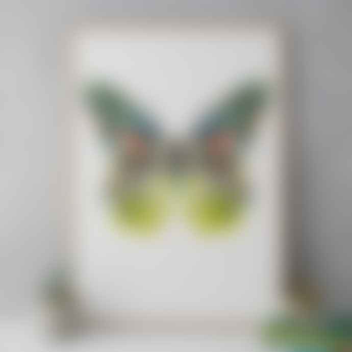 Kitty McCall Brasilia Butterfly Limited Edition Art Print