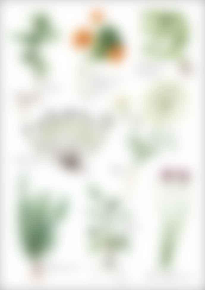Green Herbs No 2 Print