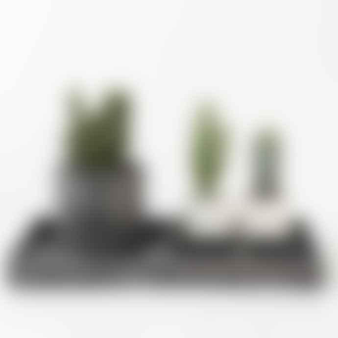 Salt Studios Mini Terrazzo Chip Plant Pot Black And White