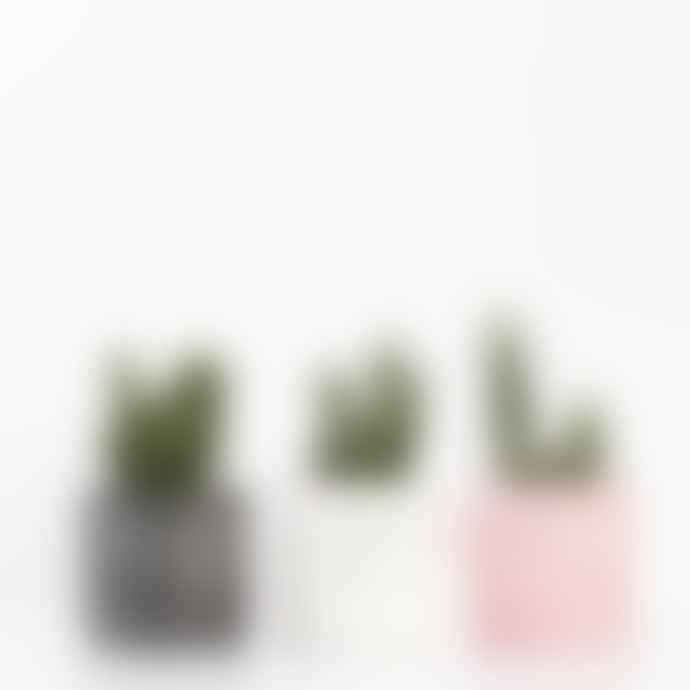 Salt Studios Medium Pink And Green Terrazzo Chip Plant Pot