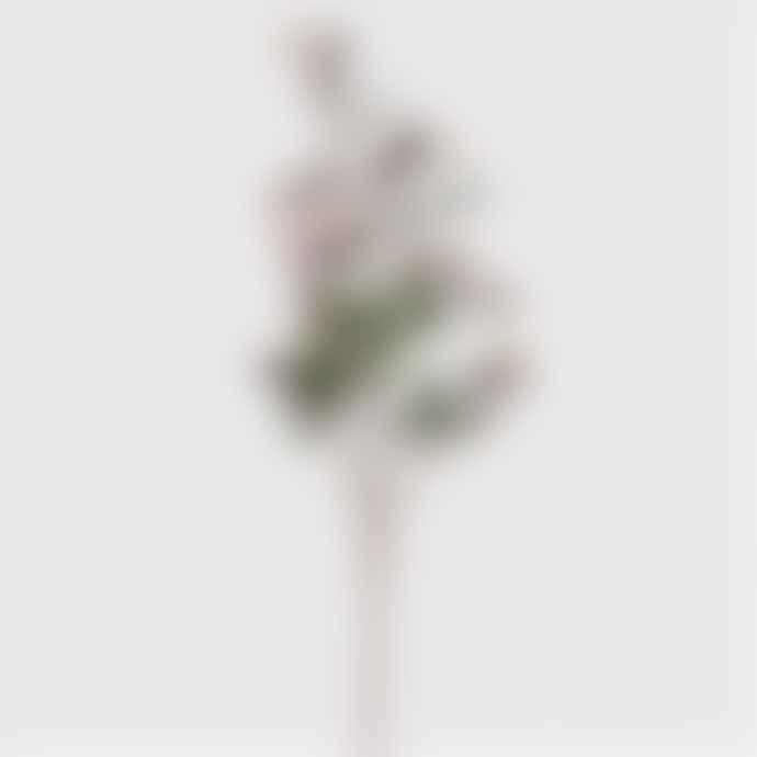 Homewood & Rose Aubergine Rosehip Spray