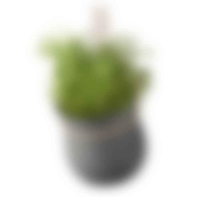 RIG-TIG GROW-IT Herb Pot