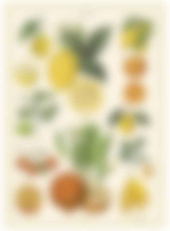Cavallini & Co Citrus Poster