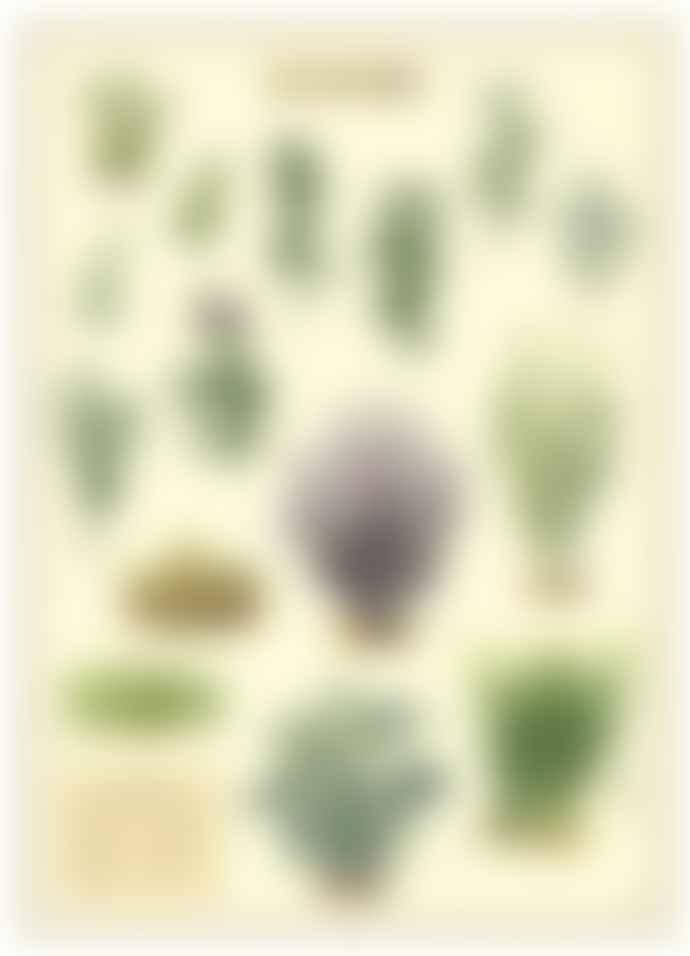 Cavallini & Co Herbs  Poster