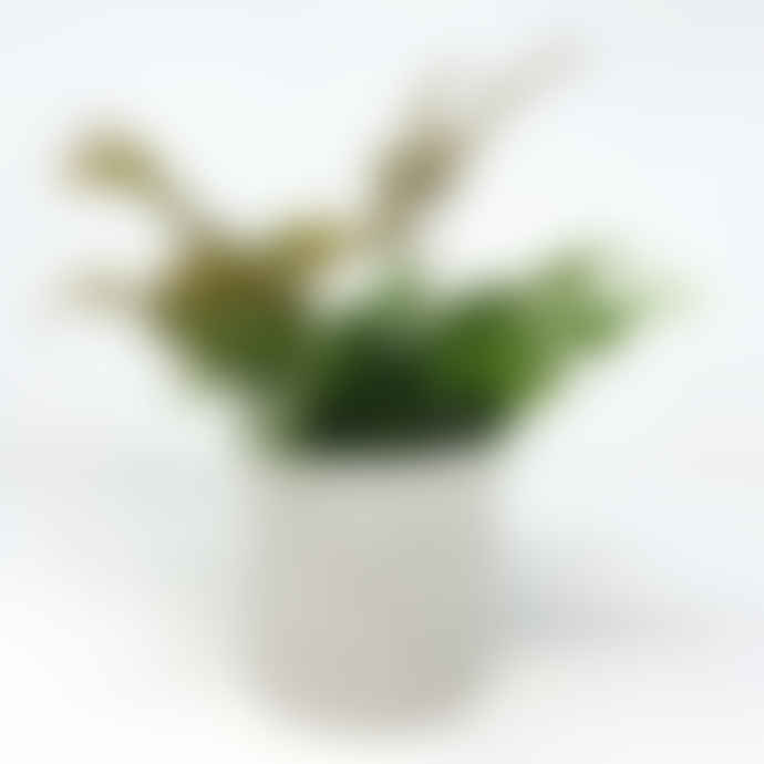 Conpot White Small Concrete & Marble Flecked Pot