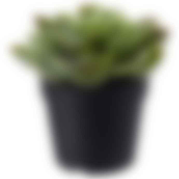 Succulent Faux Plant in Pot