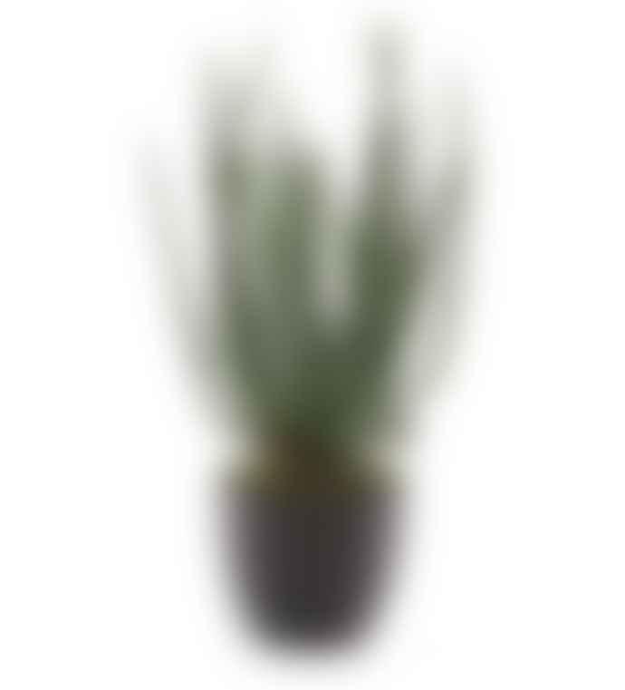 Large Faux Aloe Vera