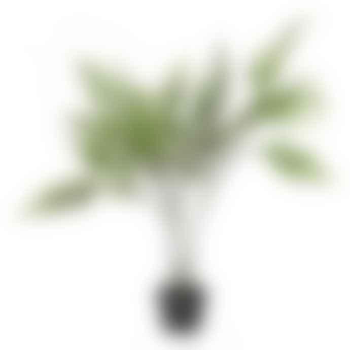 Wyld Home Large Broadleaf Fern Plant In Pot