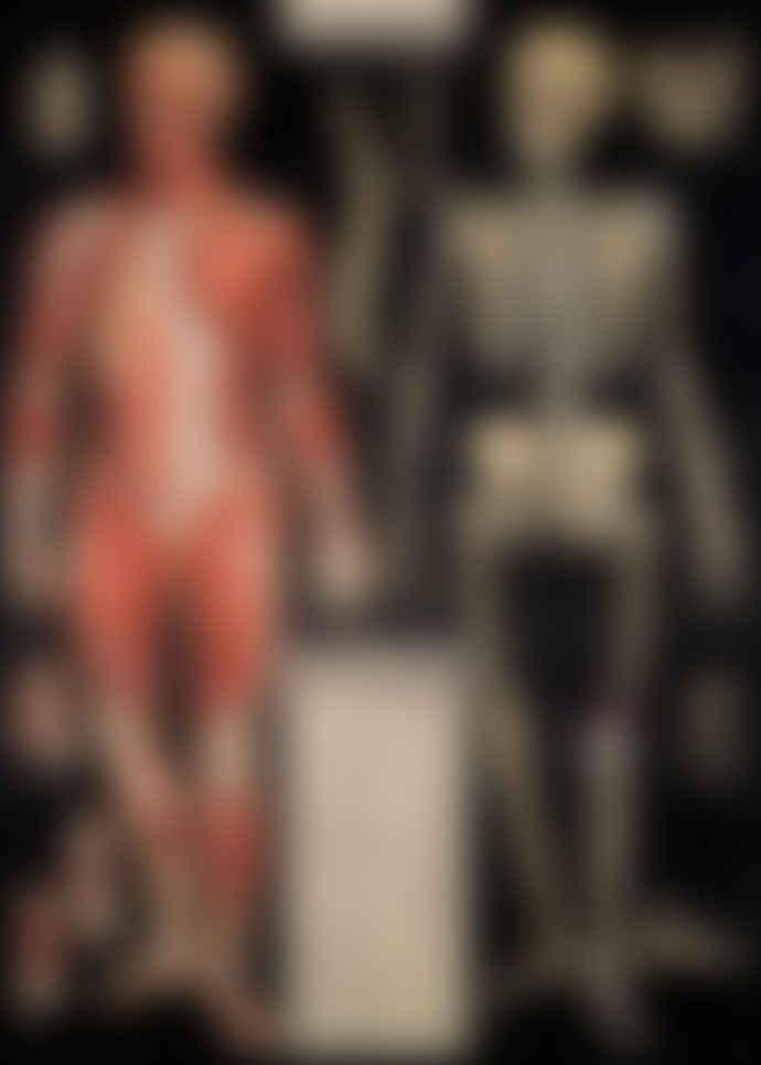 Cavallini & Co Anatomy Poster