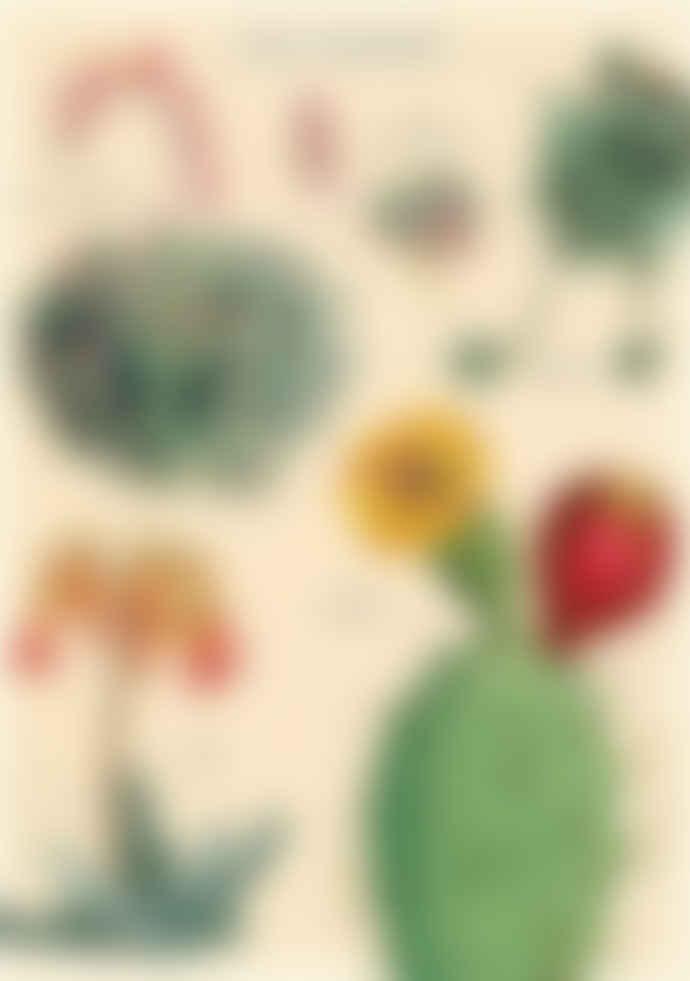 Cavallini & Co Cacti & Succulents 2 Poster