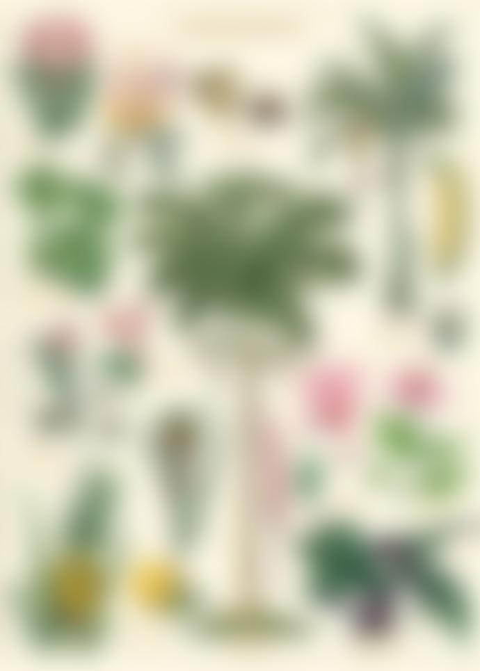 Cavallini & Co Tropical Plants  Poster
