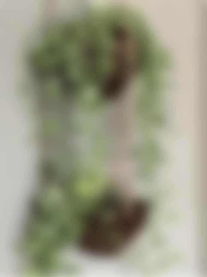 Yoshiko Natural Coconut Hanger