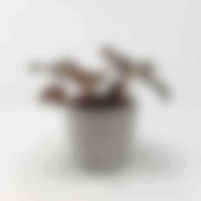 Forest Mini Grey Concrete Cylinder Pot