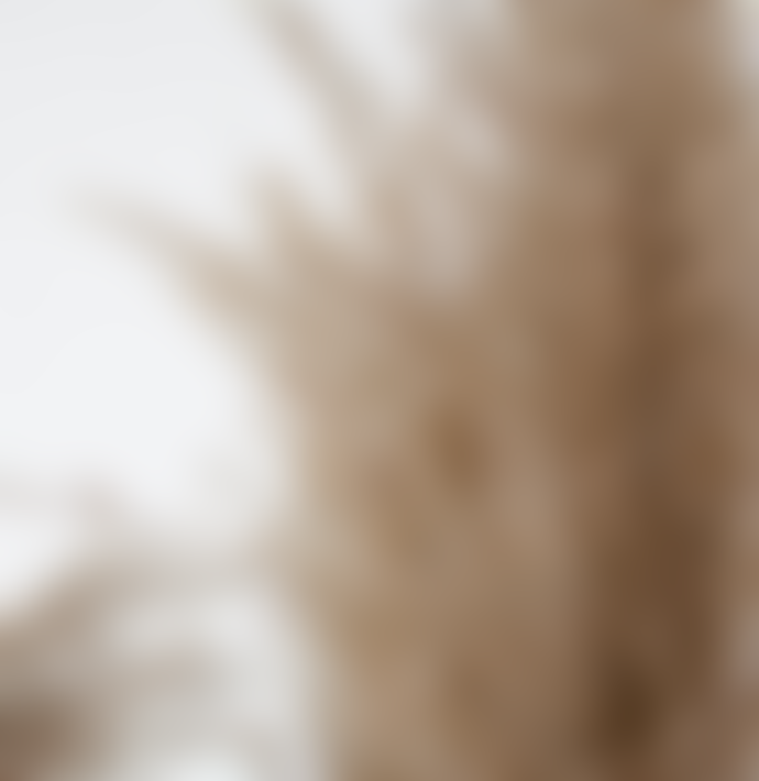 Little Deer Natural Dried Tall Wide Cortaderia Pampas Grass Bunch