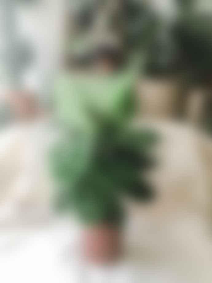 MoonKo Calathea Zebrina ~ 14cm pot
