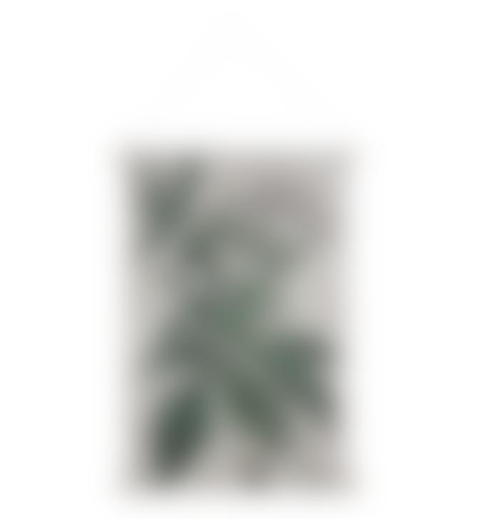 HKliving Botanical Wall Chart L
