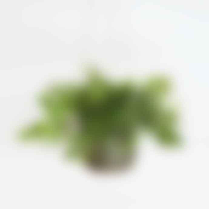 Mica Olive Hanging Flower Pot