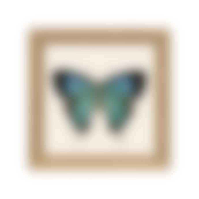 Dybdahl Butterfly print with frame