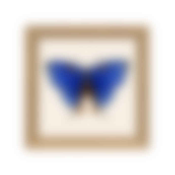 The Dybdahl Co. Butterfly print with frame