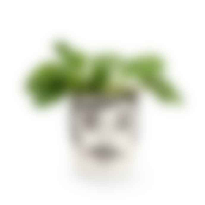 Kitsch Kitchen Jar/Planter Mr Hamilton