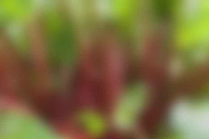 LIGA GROW Rhubarb Ginger Diffuser