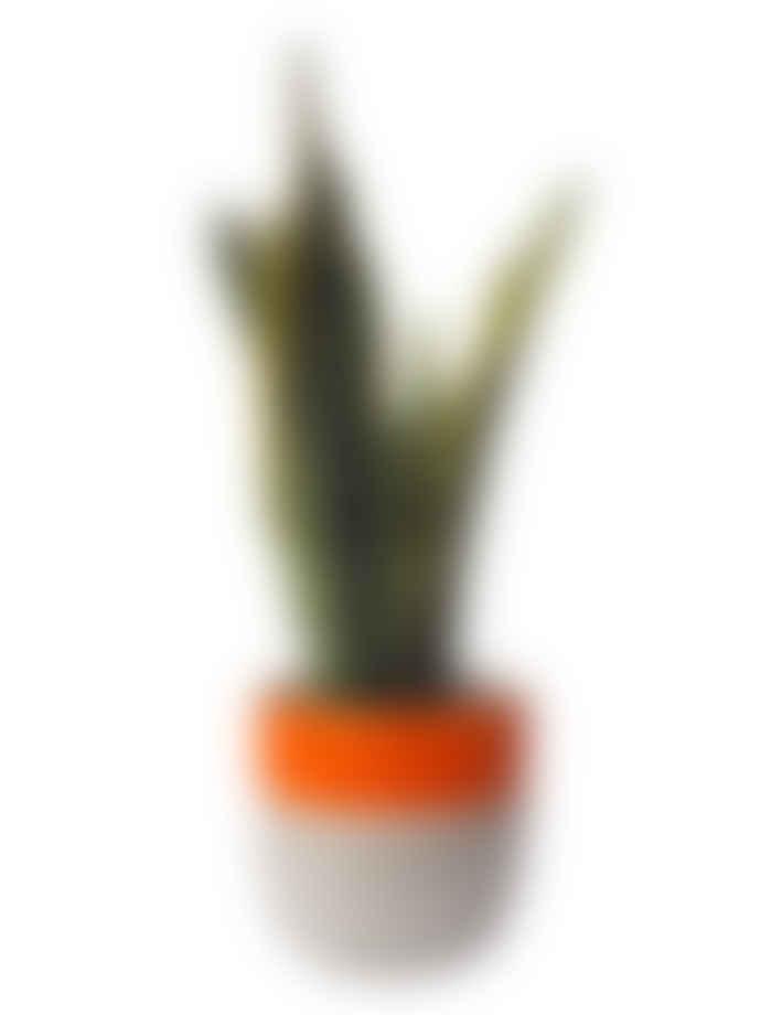 Hi Cacti Large Orange Concrete Plant Pot