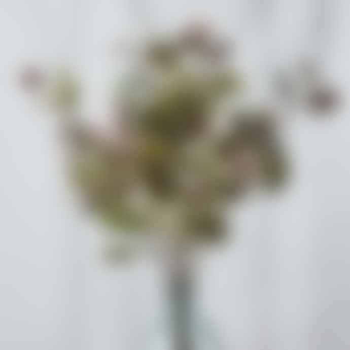 Wyld Home Burgundy Green Eucalyptus Spray