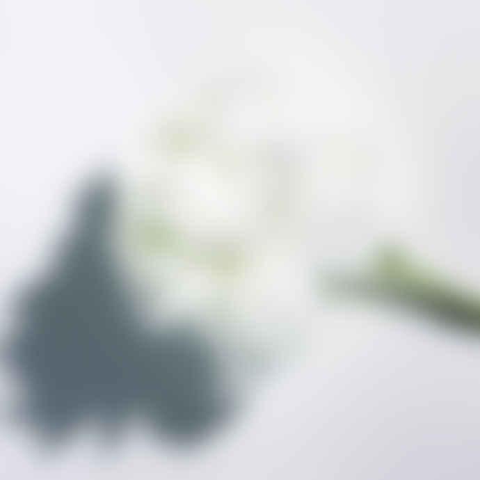 Abel Perfume Discovery Set