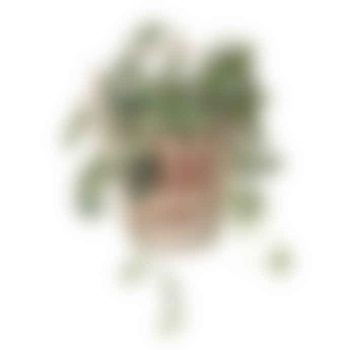 Bloomingville Terracotta Wall Flower Pot
