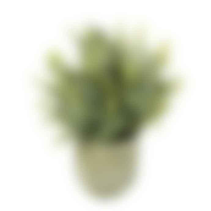 Parlane Potted Faux Eucalyptus Plant