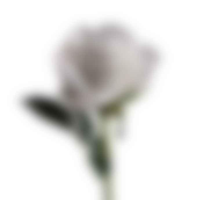 Abigail Ahern Rose White