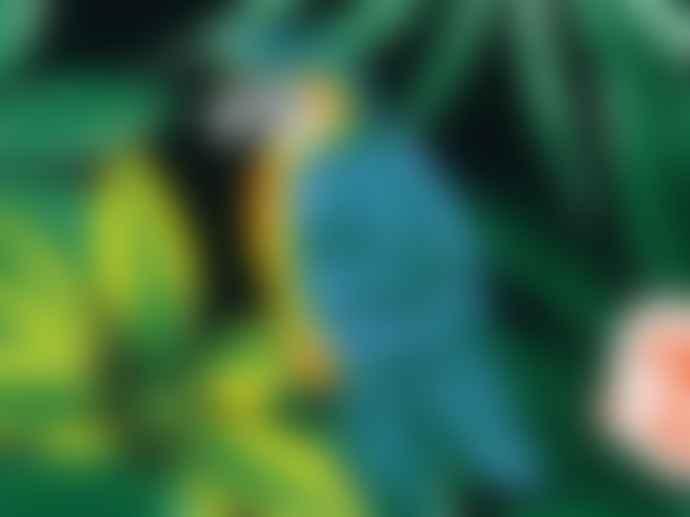 Aux grandes remedes Parrot Zipper pouch