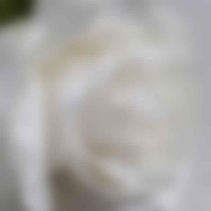 Abigail Ahern Ivory Rose Faux Flower stem