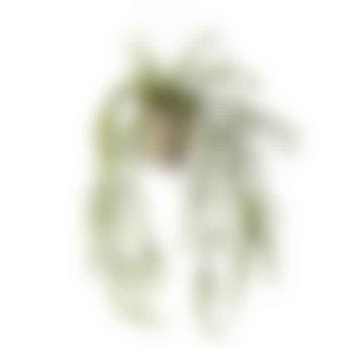 Wyld Home Mistletoe Cactus In Pot