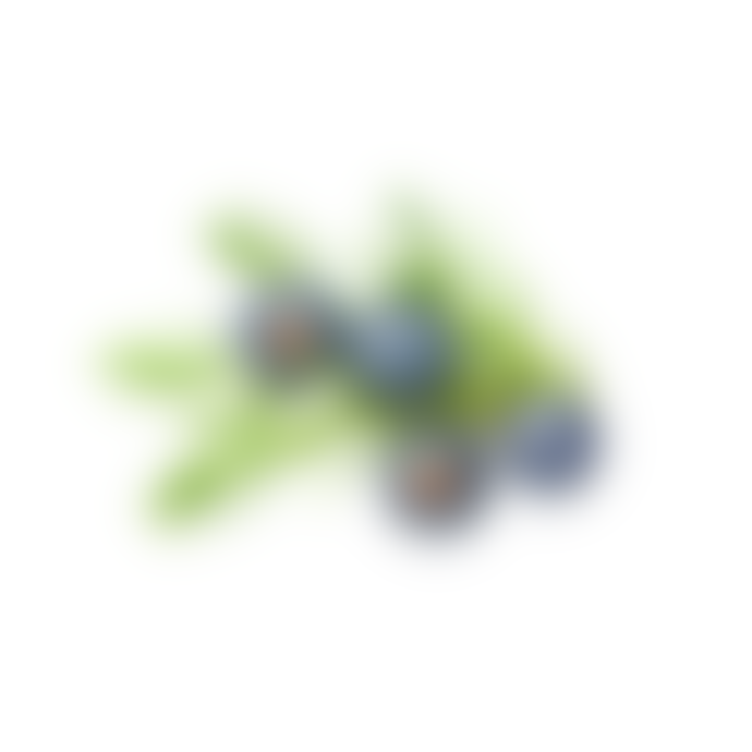 Haeckels Incense Cones Juniper