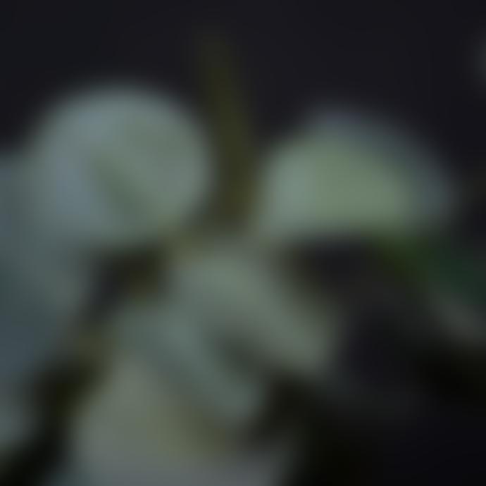 livs 40x62cm Spray of Eucalyptus Green Stem