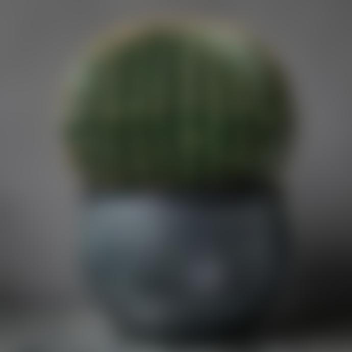 livs 36x46cm Faux Cactus Ball in Grey Pot
