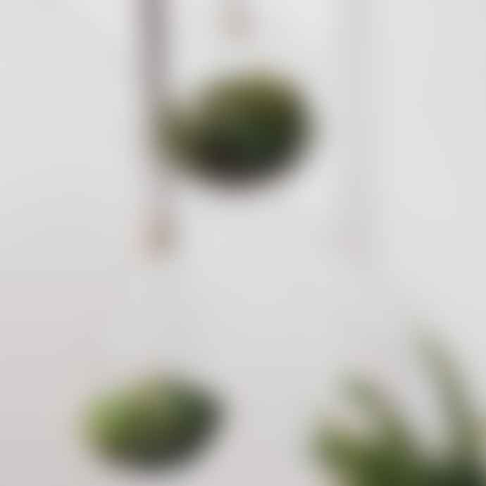 The Living Lounge Planter - hanging glass spherical planter