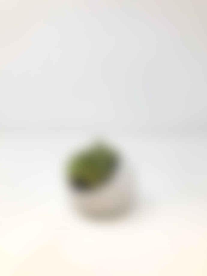 Chive White Mini Succulent Planter