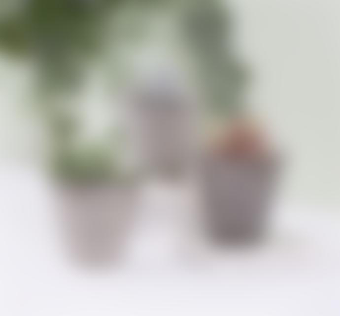 Sass & Belle  Set of 3 Black Geo Mini Planters