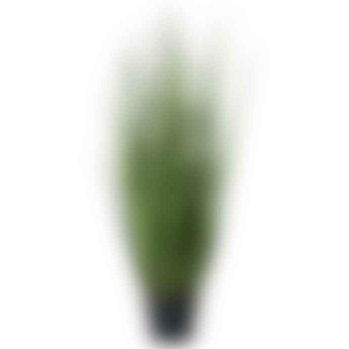 Wyld Home Grass Plant In Pot 92cm