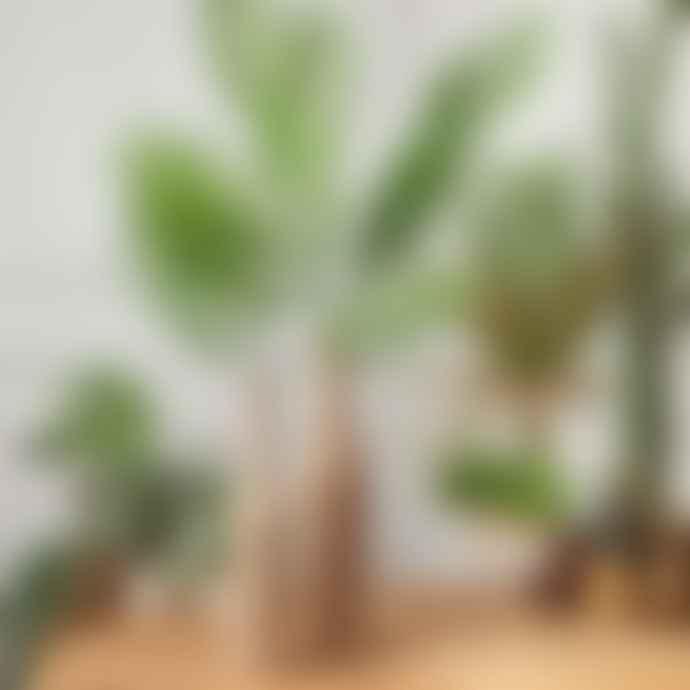 Wyld Home Palm Leaf Spray