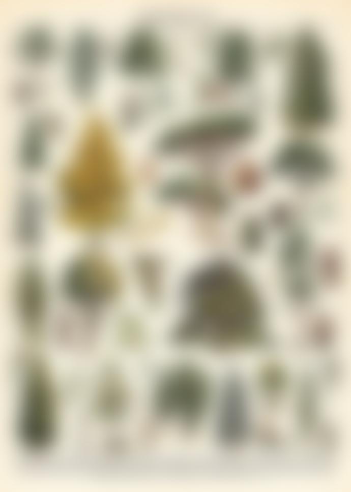 Cavallini & Co Arboretum Poster