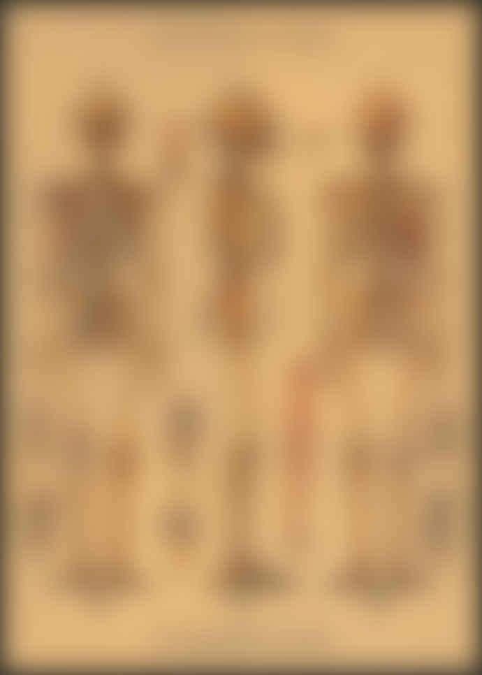 Cavallini & Co Skeleton Poster