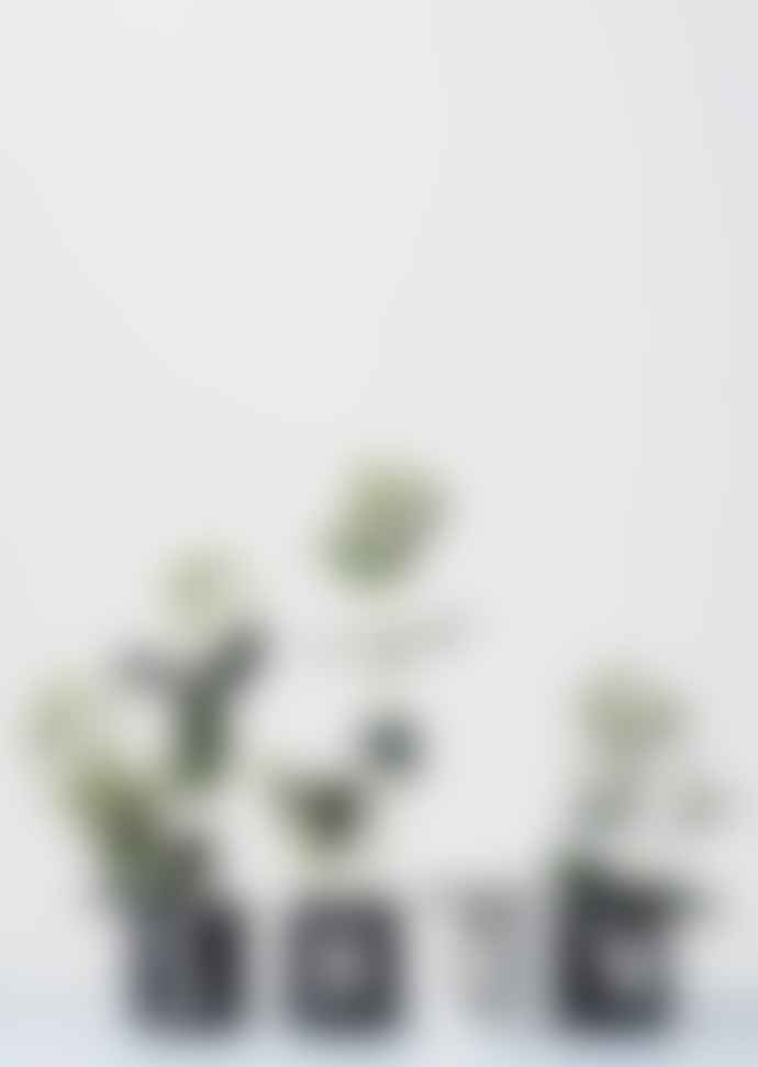 Design Letters Flower Stand Black