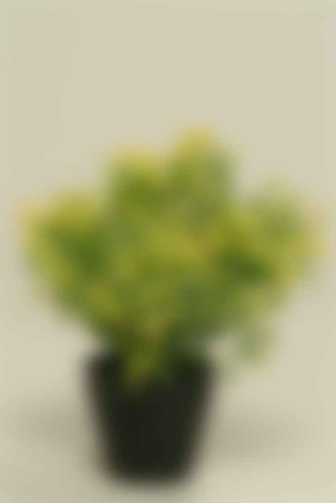 Vranckx Artificial Yellow Boxwood Flower Pot