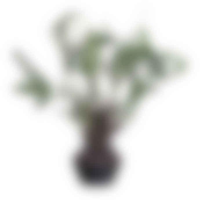 Wyld Home Fern Plant