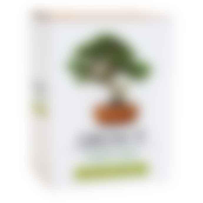 Lark London Bonsai Tree Grow It